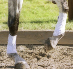Equilibrium Stretch & Flex Flatwork Wraps